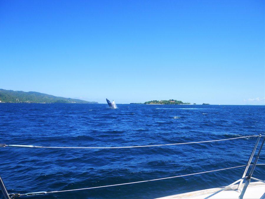 Avistamiento de ballenas en Samaná, República Dominicana