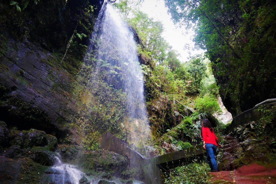 Bosque de los Tilos, La Palma