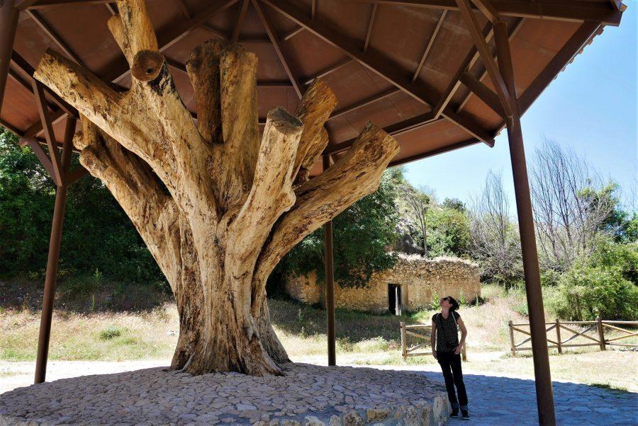 El Plantón de Covacho, Nerpio