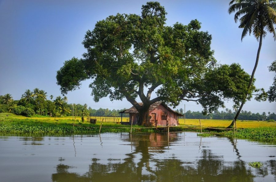 Kerala, mejores destinos para viajar a Asia