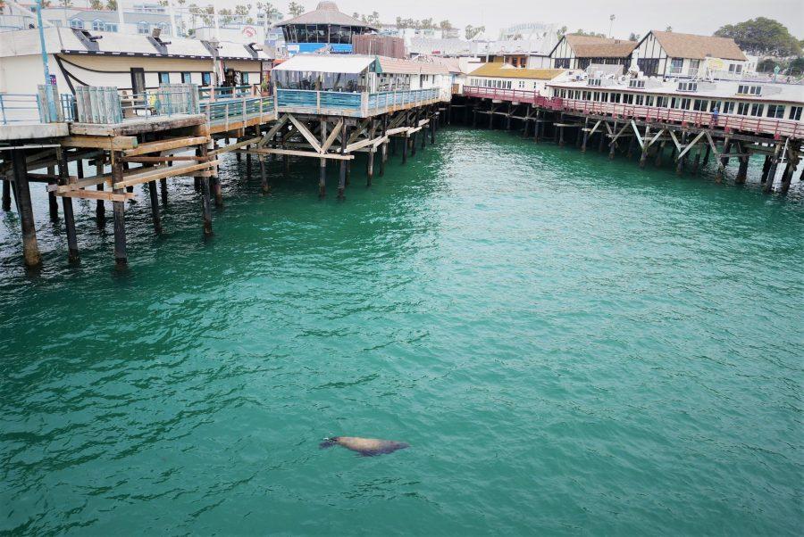Redondo Pier y sus leones marinos