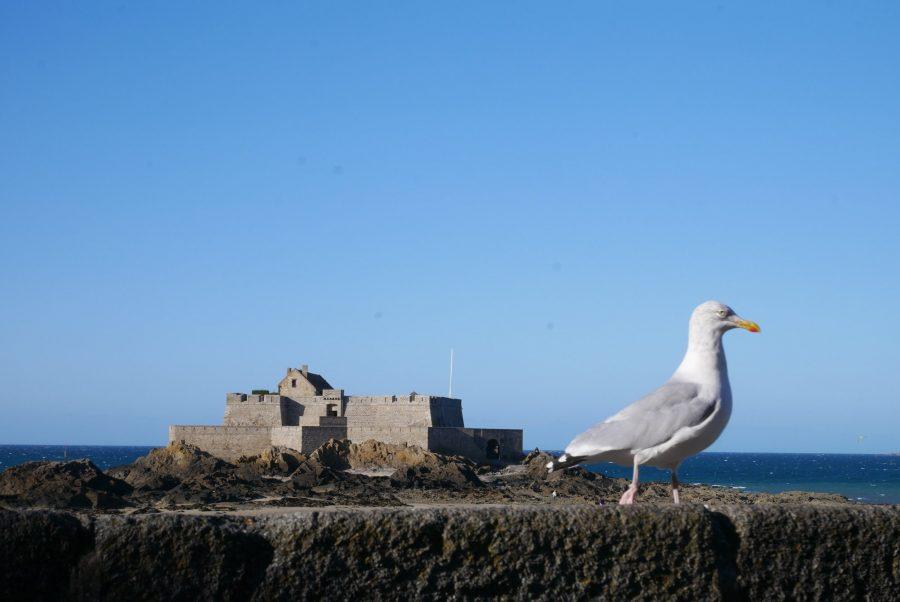 Gaviota en Saint-Malo
