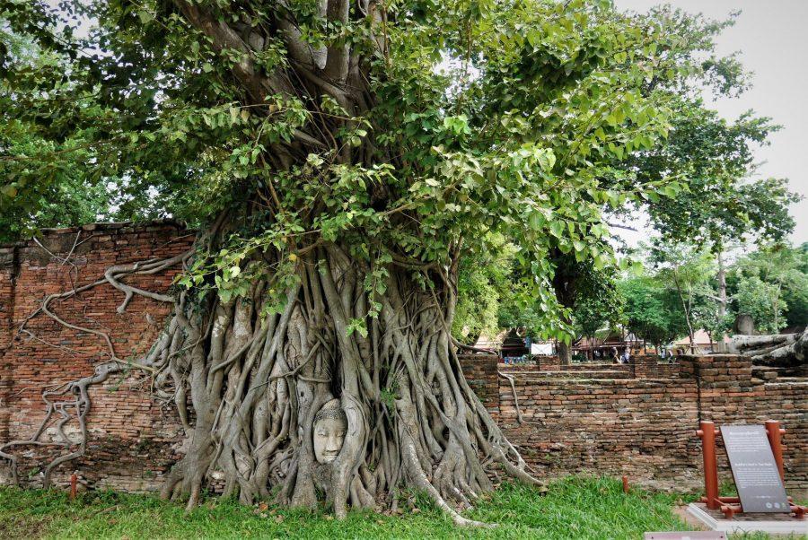 El Buda de las Raíces, Ayutthaya