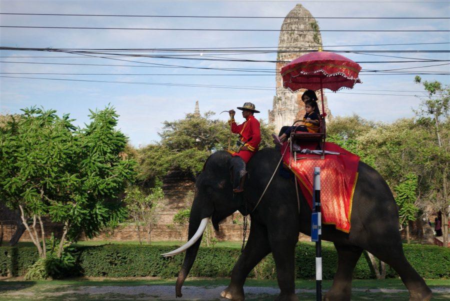 Montar en elefante en Tailandia no es turismo responsable