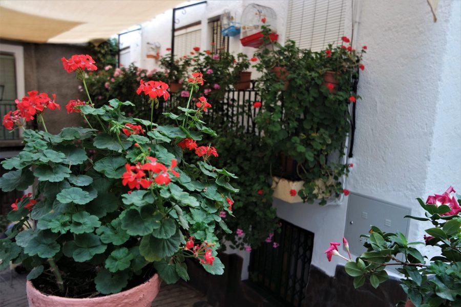 Flores, qué ver en Soportújar el pueblo de las brujas en la Alpujarra