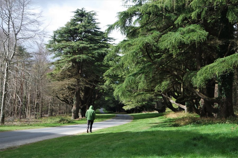 Tollymore Forest, Irlanda del Norte