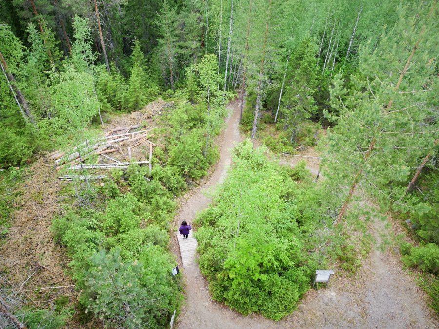 Bosques y parques naturales, qué ver en Finlandia Central