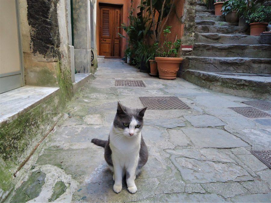 Gato en Vernazza, qué ver en Cinque Terre, Italia