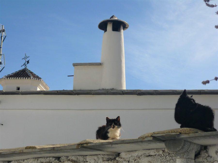 Gatos en Pitres, La Alpujarra, qué ver en Granada provincia