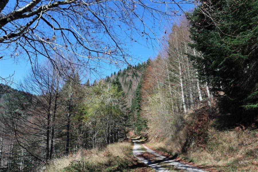 Pista forestal en la Selva de Irati, Navarra