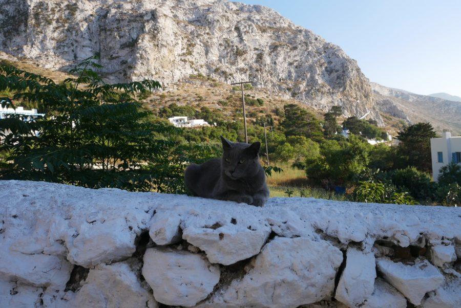 Gato en Langada, Amorgos