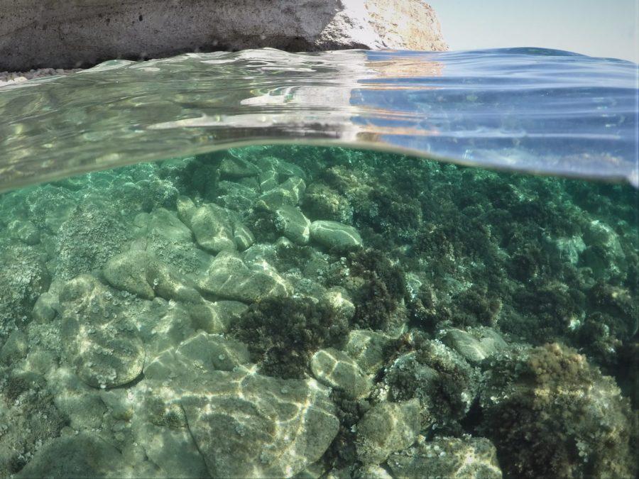 Fondos marinos, cala de San Pedro, Cabo de Gata