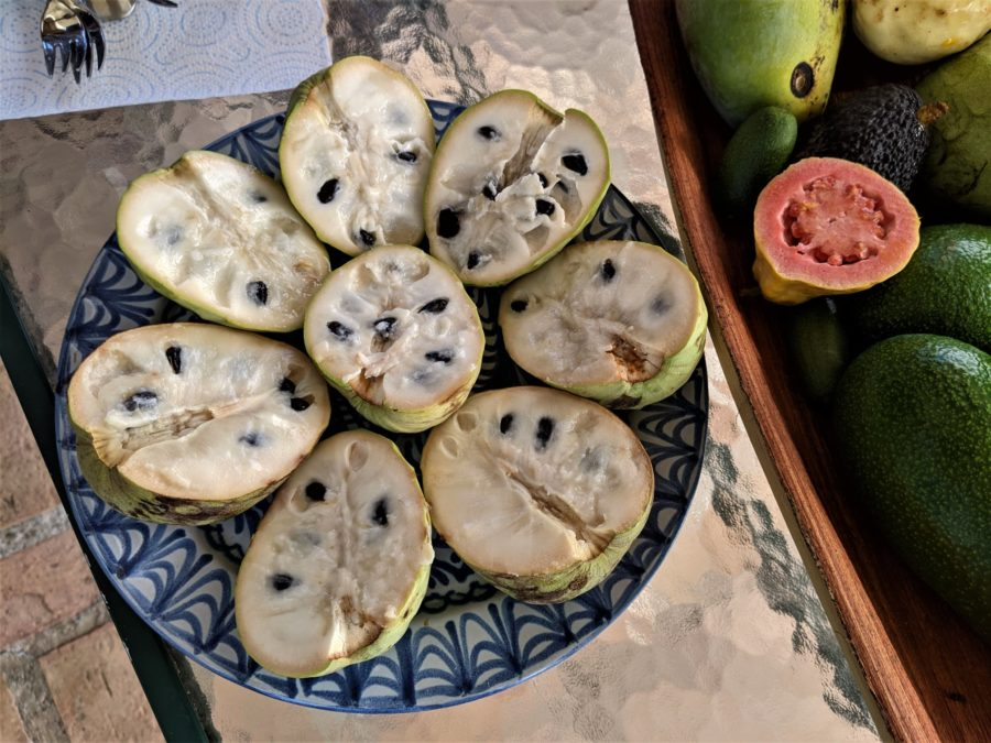 Degustación de chirimoyas en la finca ecológica Matagallares