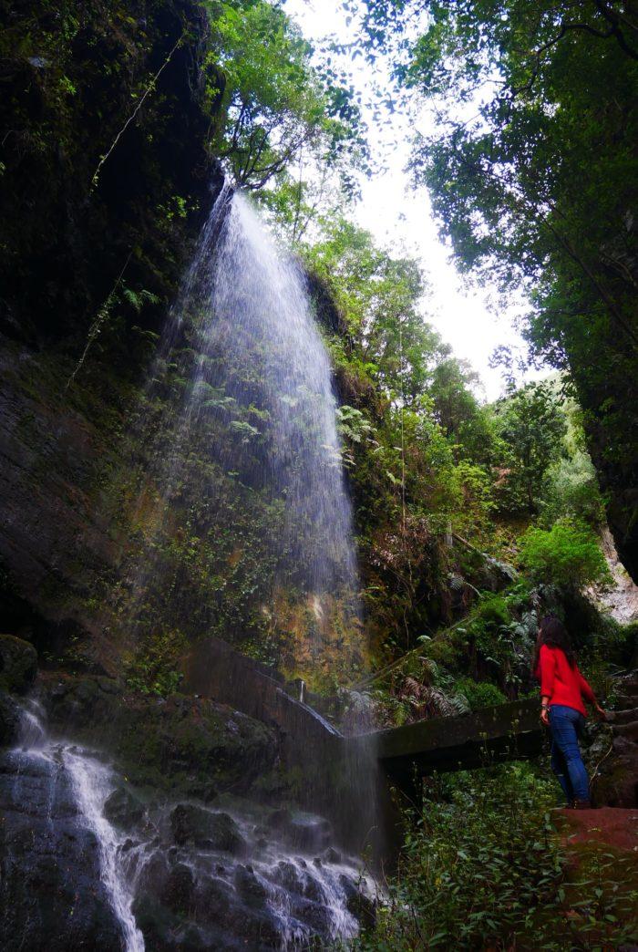 Cascada en el bosque de Los Tilos, La Palma
