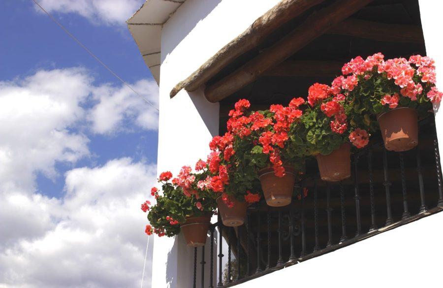 Geranios, pueblos de la Alpujarra de Granada