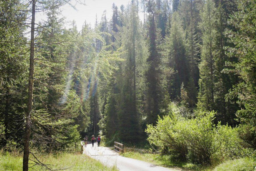 Camino del trekking a Cinque Torri