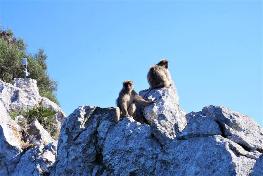 Monos en La Roca