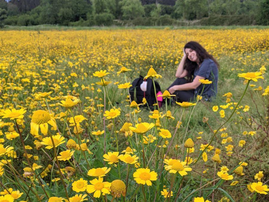 Campo de flores en Galicia, Camino Portugués a Santiago