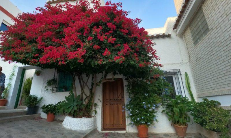 Qué hacer en Salobreña Granada