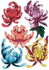 Flash chrysanthème fait par Wan
