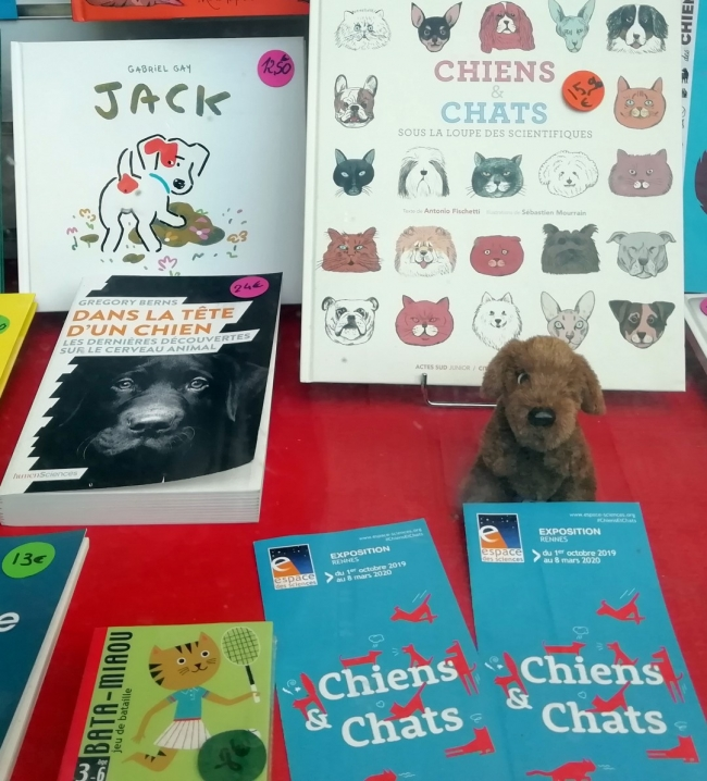 chiens-chats-rennes.jpg