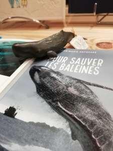 Une table thématique dédiée aux baleines, nos grandes amies