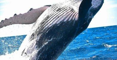 Soñar con ballena