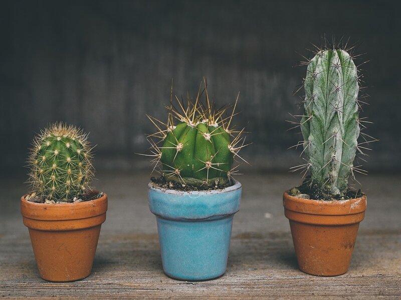 soñar con cactus
