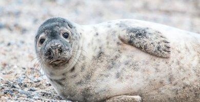 soñar con foca