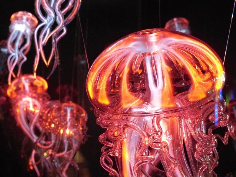 soñar con medusa