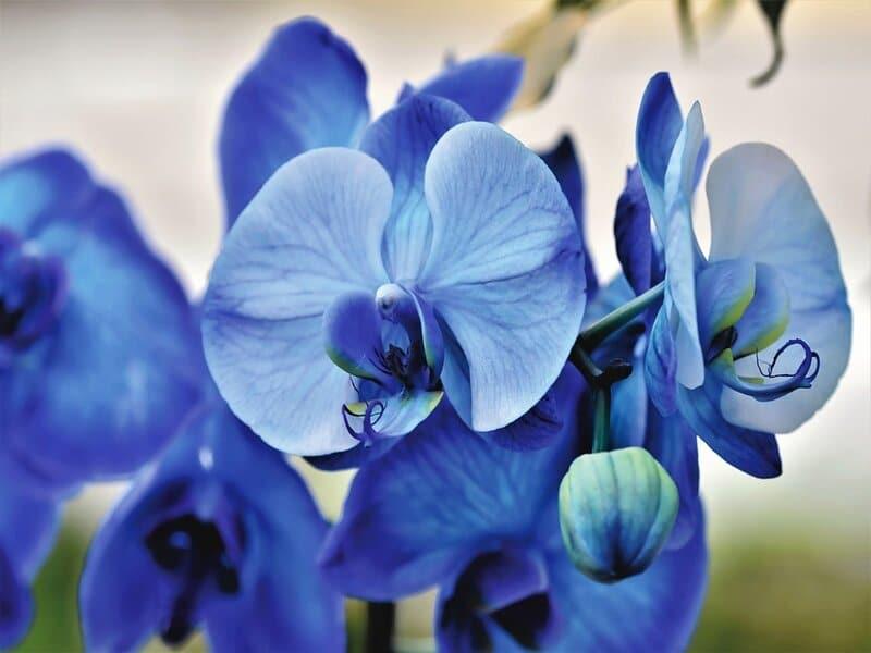 soñar con orquídeas