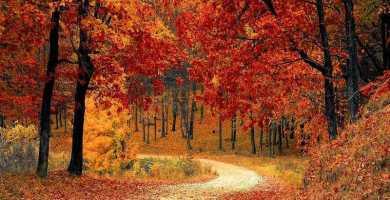 soñar con otoño