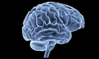 """Résultat de recherche d'images pour """"cerveau"""""""