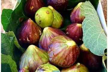 Fichi di Puglia - la cucina pugliese