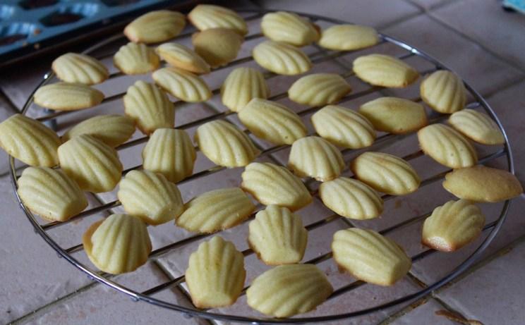Choco-madeleines
