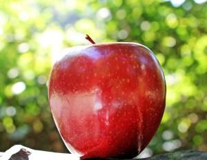 pommes aliments pas mettre frigo