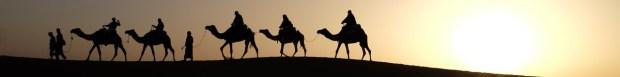 camels-1149803_1280