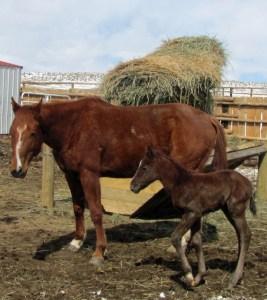 Sarita and her wild horse catch colt