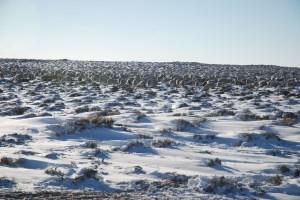 plenty of snow