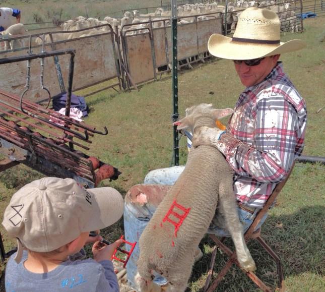 Eamon teaching his son McCoy to brand lambs