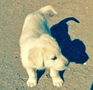 puppy  with shadow