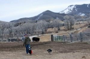 Eamon, dogs, cows