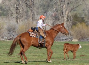 Siobhan briging in a calf