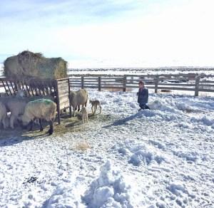 Tiarnan checks out the only (so far) two lambs