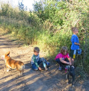 Val, Tiarnan, Maeve, Roxie and Seamus checking out the chokecherries