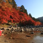 """Popular fall foliage spots! Make the Tomoe River Valley's """"komakado kazaana cave.、4,000In the book also leaves this year is a stunning Red"""