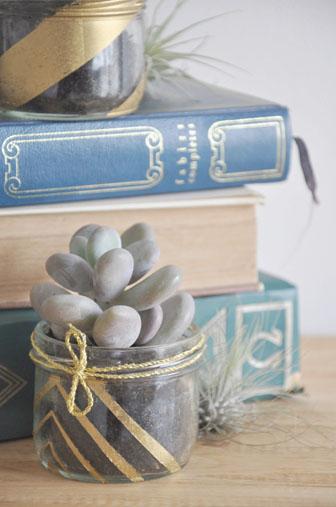 ambiance dorée et succulentes, plantes grasses