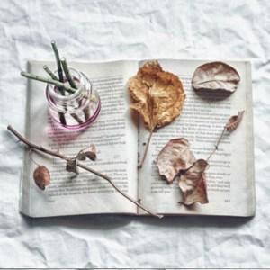 livre ancien ouvert avec feuilles mortes