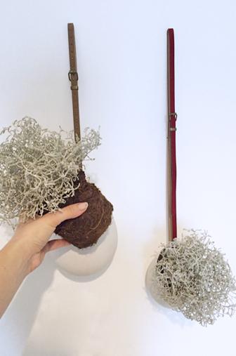 installer les plantes dans les pots suspendus