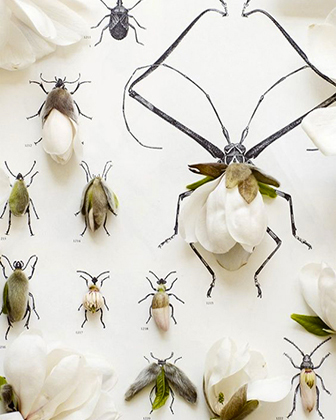 insect flower collection